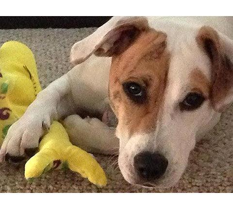 Wish List: Small SQUEAKY Love 'em Ups for Humane Society of Ocean City