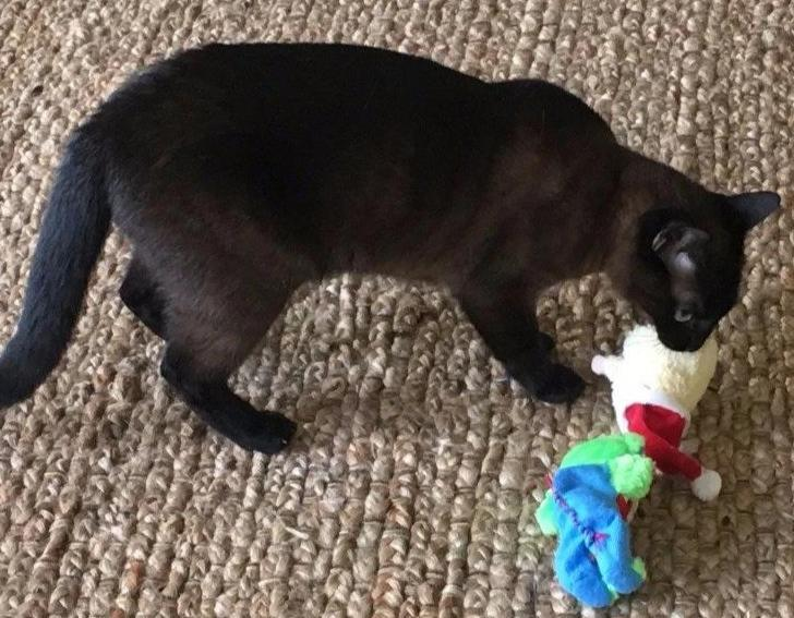 Kitty Combo Catnip & Rattle Toy