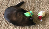 SAVE 25%! Kitty Combo Catnip & Rattle Cat Toy / Organic Catnip