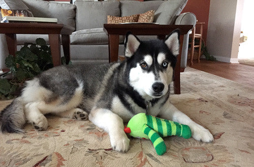 Wish List: Medium SQUEAKY Dog Toy for City of Dunn Animal Control