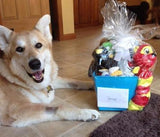 Medium Gift Basket for Dogs & Puppies: Squeaky or No Squeak Toys