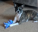 Small Barely Stuffed Dog Toy with Big SQUEAKER
