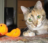 Wish List: Kitty Bat About Rattle Cat Toys for Hardee Animal Rescue Team