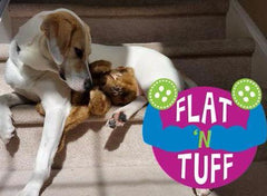 Medium Flat 'n Tuff: No Stuffing, Squeak or Not
