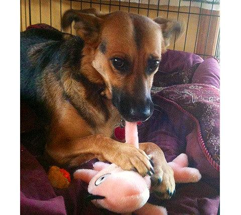 Wish List: Medium SQUEAKY Stuffed for Krys's Rescue Center