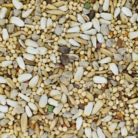 Hulled Sunflower Cockatiel Seed Mix by Conestogo Bird Seed Company - Exotic Wings and Pet Things