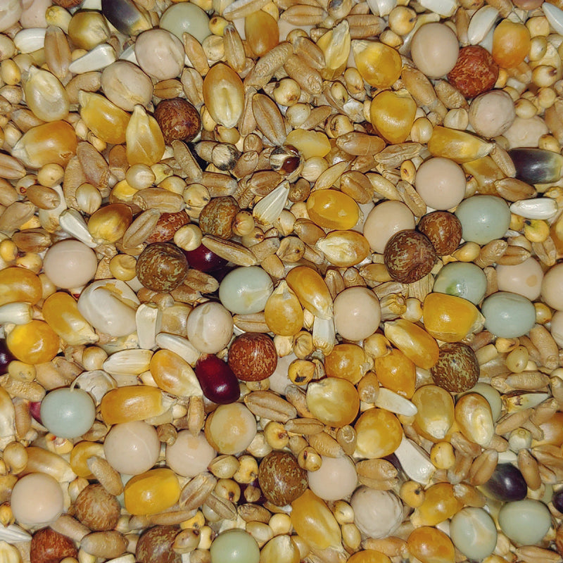 Popcorn Deluxe Pigeon Mix by Conestogo Bird Seed Company - Exotic Wings and Pet Things