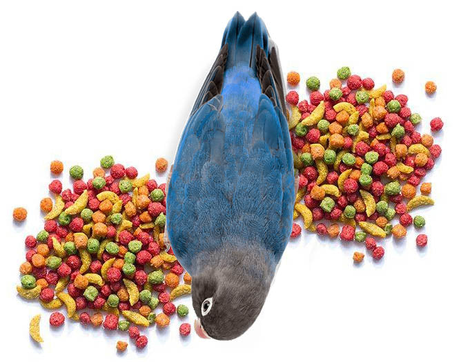 ZuPreem FruitBlend Daily Nutrition Medium Bird Pellet
