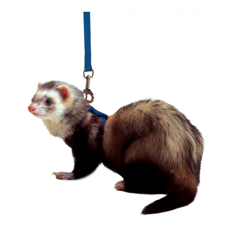 Marshall Ferret Harness & Lead Set - Exotic Wings and Pet Things
