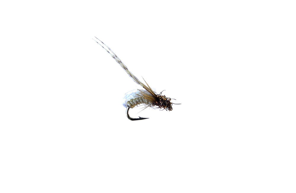 Gallatin Glow Pupa Spotted Sedge (12 Pack)