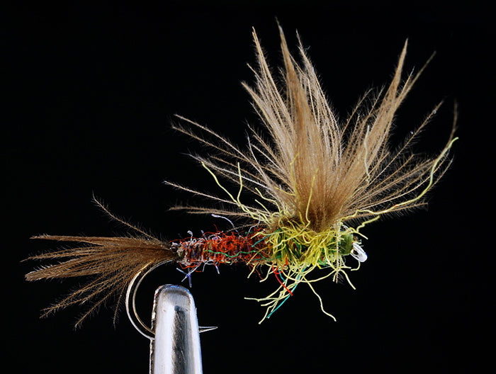 Loidl's CDC Split Wing Emerger -  PMD (12 Pack)