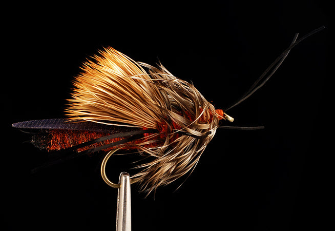 Big-R Bug - Salmonfly (12 Pack)
