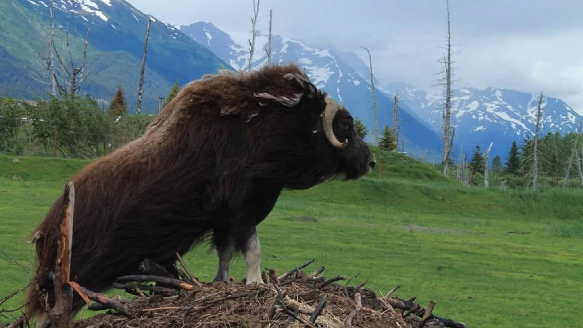 8 Majestic Alaskan Adventures, MuskOx Apparel