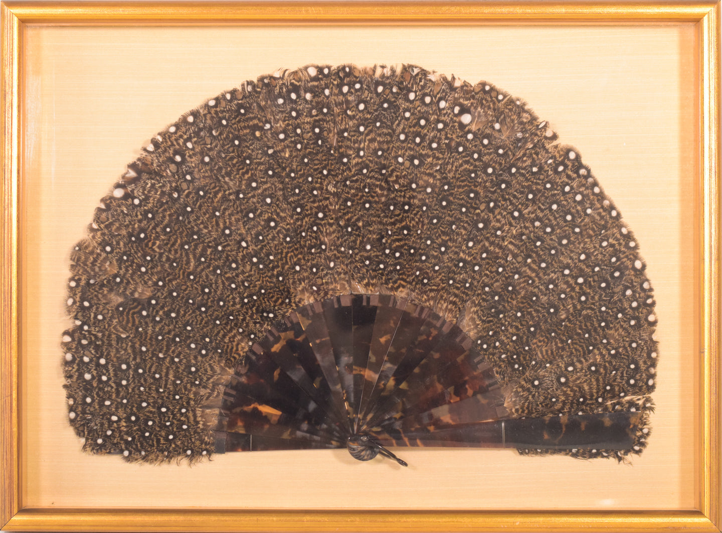 Peacock feather and shell fan framed