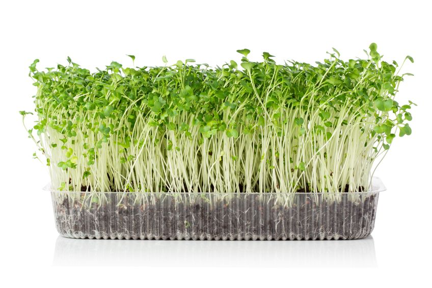 sprouts + microgreens