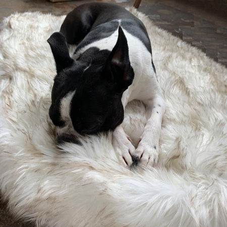 Snoozify™ Orthopedic Dog Rug
