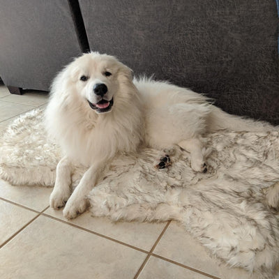 Memory Foam Orthopedic Dog Rug