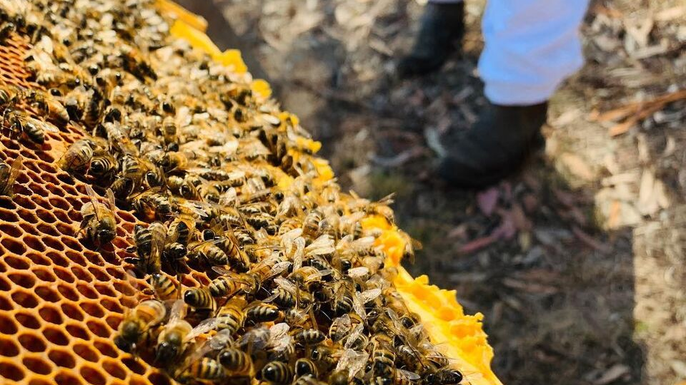 An Insight into Beekeeping
