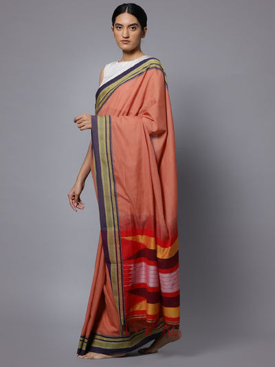 Coral ilkal handloom cotton saree