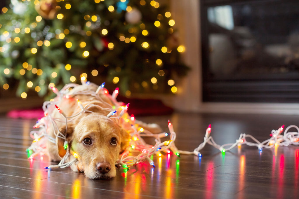 Tips For Making The Holidays Safer For Your Pets