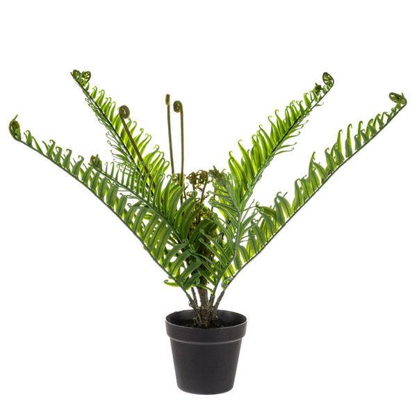 Potted Fern Plant