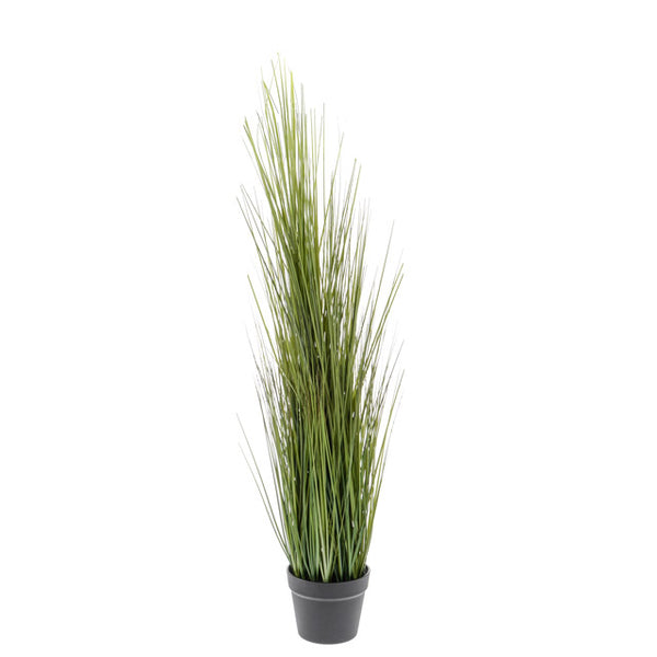 Potted Grass Plant