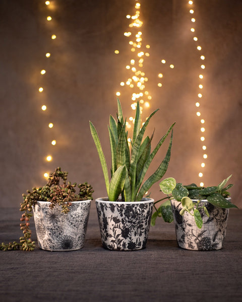 Set of 3 Monochrome Planters