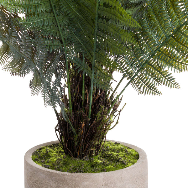 Stone Potted Fern