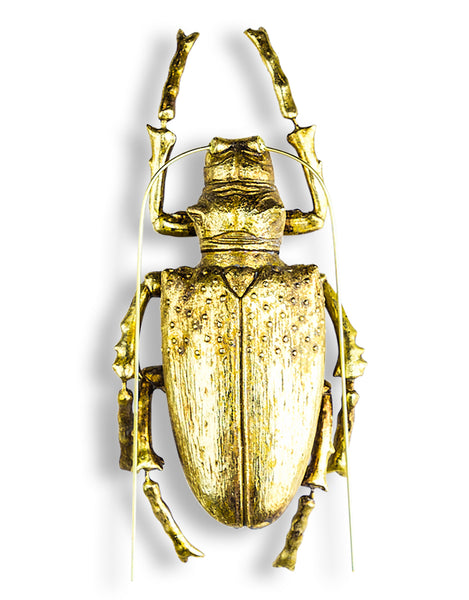 Large Gold Stag Beetle