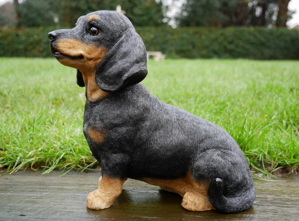 Dishy the Dachshund