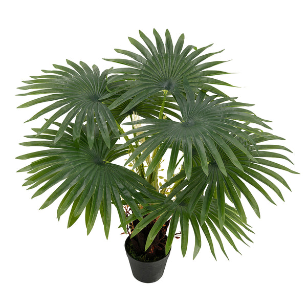 Fern Tree In Pot