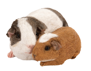 Gilly and Gabe the Guinea Pigs