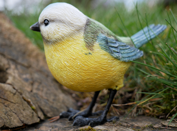 Barry the Blue Tit