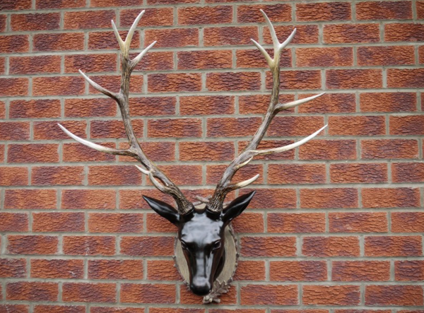 Large Stag Head