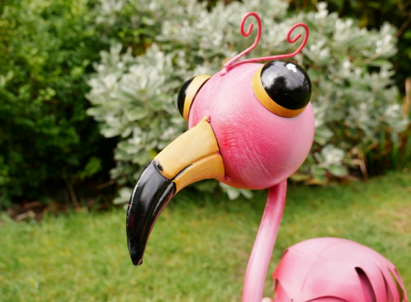 Mango the Flamingo!