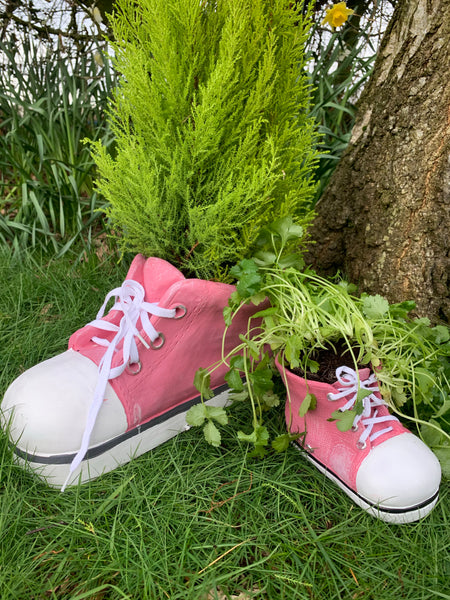 Baby Pink Converse