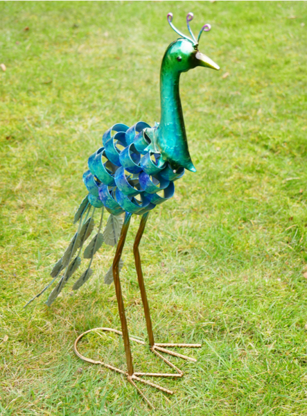Prince the Baby Peacock!