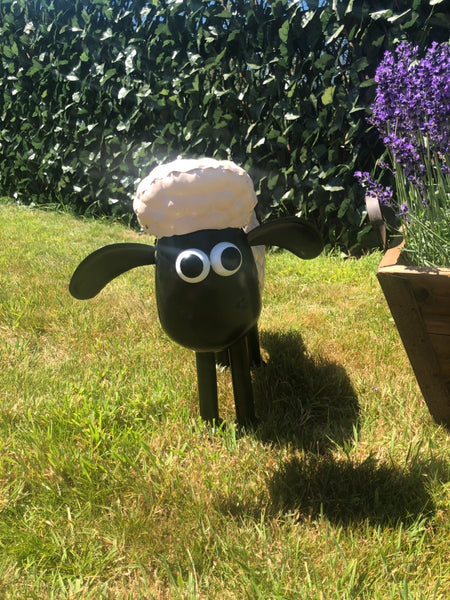 Shaun & Timmy the Sheep!