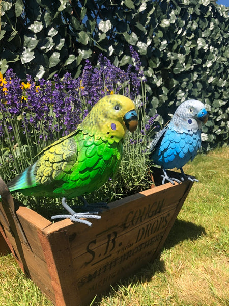 Babs & Billy the Budgies!