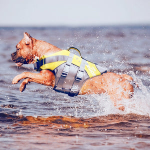 Dog With Waterproof Life Jacket Jumping In Water