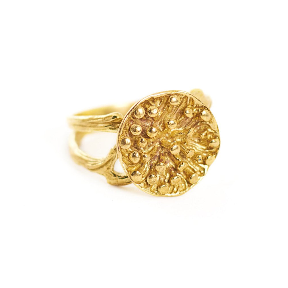 Ring Lotus Seeds Big Gold