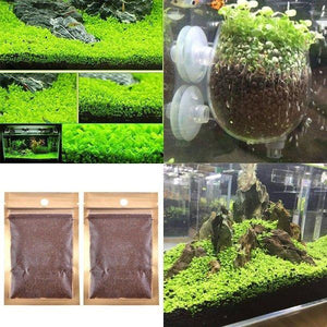 Aquatic Double Leaf Plant Seeds Aquarium Plant Seeds Aquarium Fish Tank Decor