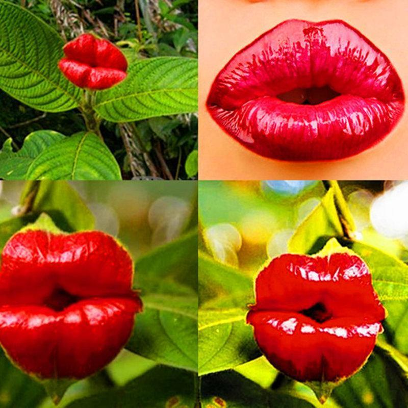 100Pcs Red Lips Flower Seeds Sexy Kiss Rosy Lip Plants Garden Bonsai Psychotria Elata Seeds