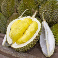 10Pcs/Bag Durian Tree Seeds Delicious King of Fruit Seeds High-nutrition Rare Bonsai Seeds