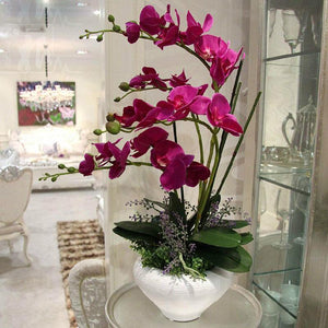 200pcs/Bag Phalaenopsis Orchid Seeds Orchid Bonsai Plants Flowers Seeds For Home Garden Plants