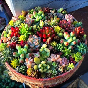 100pcs Mix Rare Succulents Plants Seeds Garden Home Decor
