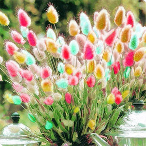 100pcs Tropical Ornamental Plants Grass Seeds Bunny Tails Grass Bonsai Flower Seeds