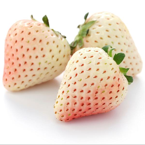 500Pcs Powder Crystal Strawberry Seeds Garden Fruit Seeds Heirloom Super Strawberry Garden Seeds