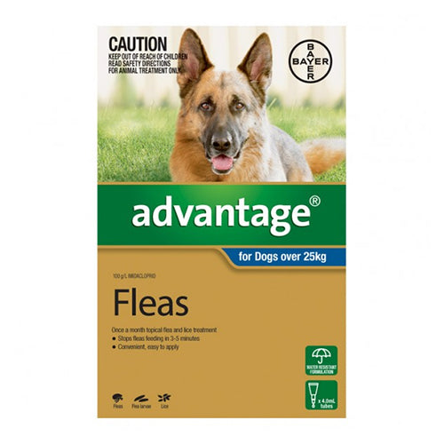 Advantage large dog flea control 4pk