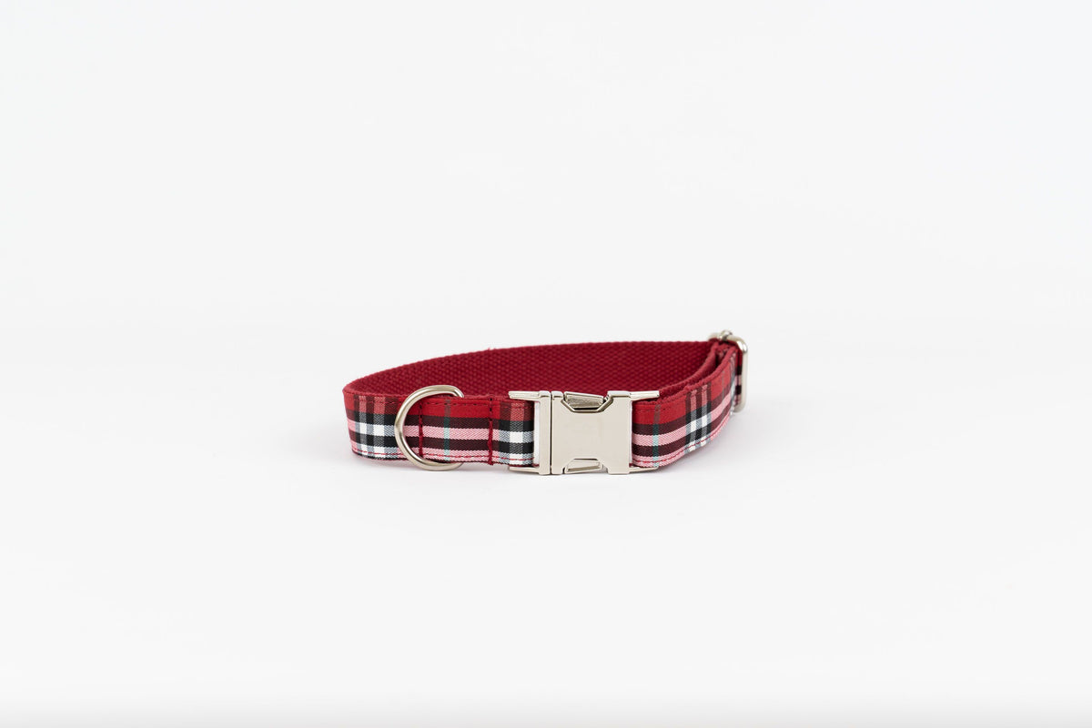West Highland Collar